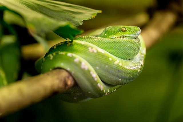zelený had na větvi