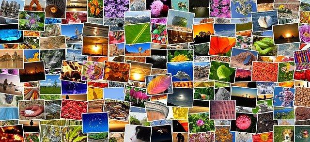fotky z různých koutů