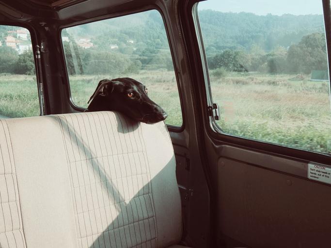 pes v dodávce